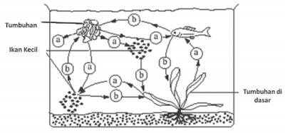 organisme perairan