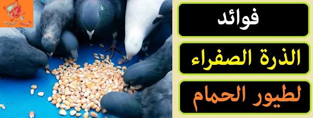 """""""فوائد الذرة الصفراء للحمام"""" """"فائدة الذرة الصفراء لطيور الحمام"""" """"فيتامينات الذرةا لصفراء للحمام"""" """"الحمام والذرة الصفراء"""" """"خلطة علف الحمام"""" """"تركيبة علف للحمام"""" """""""",""""ماذا يأكل الحمام"""","""""""","""""""","""""""","""""""","""""""","""""""","""""""" """""""",""""ماذا يأكل الحمام الصغير"""","""""""","""""""","""""""","""""""","""""""","""""""","""""""" """""""",""""ماذا يأكل الحمام البلدي"""","""""""","""""""","""""""","""""""","""""""","""""""","""""""" """""""",""""ماذا يأكل الحمام واليمام"""","""""""","""""""","""""""","""""""","""""""","""""""","""""""" """""""",""""ماذا يأكل الحمام من البيت"""","""""""","""""""","""""""","""""""","""""""","""""""","""""""" """""""",""""ماذا يأكل الحمام البري"""","""""""","""""""","""""""","""""""","""""""","""""""","""""""" """""""",""""ماذا يأكل الحمام الابيض"""","""""""","""""""","""""""","""""""","""""""","""""""","""""""" """""""",""""ماذا يأكل الحمام الهزاز"""","""""""","""""""","""""""","""""""","""""""","""""""","""""""" """""""",""""ماذا ياكل الحمام والعصافير"""","""""""","""""""","""""""","""""""","""""""","""""""","""""""" """""""",""""ماذا يأكل الحمام الزاجل"""","""""""","""""""","""""""","""""""","""""""","""""""","""""""" """""""",""""ما هو افضل اكل للحمام"""","""""""","""""""","""""""","""""""","""""""","""""""","""""""" """""""",""""ماذا ياكل الحمام الزغاليل"""","""""""","""""""","""""""","""""""","""""""","""""""","""""""" """""""",""""ما هو طعام الحمام"""","""""""","""""""","""""""","""""""","""""""","""""""","""""""" """""""",""""ما هو اكل الحمام الصغير"""","""""""","""""""","""""""","""""""","""""""","""""""","""""""" """""""",""""ماهو اكل الحمام الصغير"""","""""""","""""""","""""""","""""""","""""""","""""""","""""""" """""""",""""ماذا ياكل الحمام البلدي"""","""""""","""""""","""""""","""""""","""""""","""""""","""""""" """""""",""""ما هو اكل الحمام البلدي"""","""""""","""""""","""""""","""""""","""""""","""""""","""""""" """""""",""""ماذا يأكل اليمام"""","""""""","""""""","""""""","""""""","""""""","""""""","""""""" """""""",""""ماذا ياكل اليمام"""","""""""","""""""","""""""","""""""","""""""","""""""","""""""" """""""",""""ماذا ياكل الحمام من المنزل"""","""""""","""""""","""""""","""""""","""""""","""""""","""""""" """""""",""""ماذا ياكل الحمام من البيت"""","""""""","""""""","""""""","""""""","""""""","""""""","""""""" """""""",""""ماذا ياكل فرخ الحمام البري"""","""""""","""""""","""""""","""""""","""""""","""""""","""""""" """""""",""""ماهو اكل الحمام الزغاليل"""","""""""","""""""","""""""","""""""","""""""","""""""","""""""" """""""",""""اكل الحمام الهزاز"""","""""""","""""""","""""""","""""""","""""""","""""""","""""""" """""""",""""ماذا ياكل زغلول الحمام"""","""""""","""""""","""""""","""""""","""""""","""""""","""""""" """""""",""""ما افضل اكل للحمام"""","""""""","""""""","""""""","""""""","""""""","""""""","""""""" """""""",""""ما هو افضل طعام للحمام"""","""""""","""""""","""""""","""""""","""""""","""""""","""""""" """""""",""""طعام الزغاليل الحمام"""","""""""","""""""","""""""","""""""","""""""","""""""","""""""" """""""",""""اكل الزغاليل الحمام"""","""""""","""""""","""""""","""""""","""""""","""""""","""""""" """""""",""""ماذا تاكل الزغاليل"""","""""""","""""""","""""""","""""""","""""""","""""""","""""""" """""""",""""ما هو طعام الحمامة"""","""""""","""""""","""""""","""""""","""""""","""""""","""""""" """""""",""""ما هو طعام زغاليل الحمام"""","""""""","""""""","""""""","""""""","""""""","""""""","""""""" """""""",""""ما هو طعام فرخ الحمام"""","""""""","""""""","""""""","""""""","""""""","""""""","""""""" """""""",""""ما هو الطعام الذي يجعل الحمام يبيض"""","""""""","""""""","""""""","""""""","""""""","""""""","""""""" """""""",""""ما هو الطعام المفيد للحمام"""","""""""","""""""","""""""","""""""","""""""","""""""","""""""" """""""",""""ما هو طعام الحمام المفضل"""","""""""","""""""","""""""","""""""","""""""","""""""","""""""""""