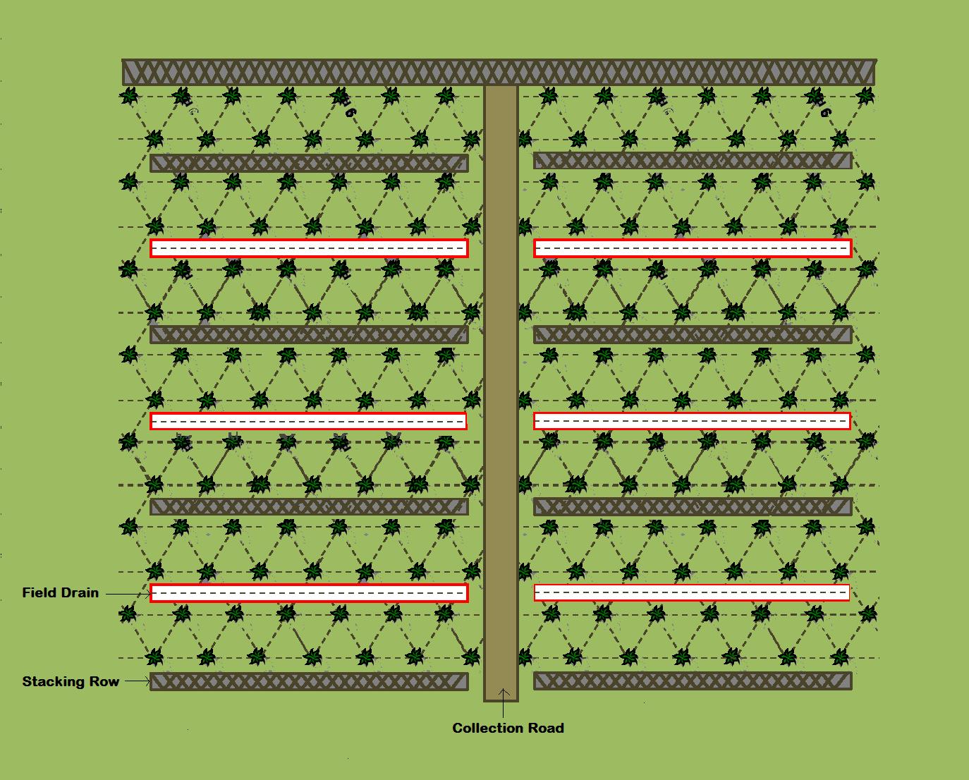PALM PLANTERS Potensi Dan Penge Aan Lahan Gambut Untuk Kelapa Sawit