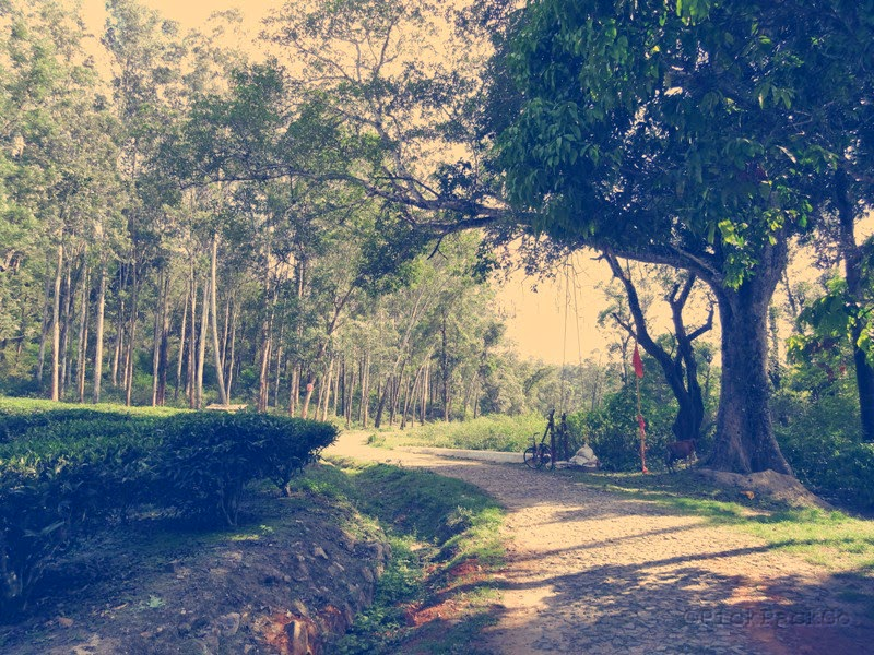 Kerala country road with tea plantations