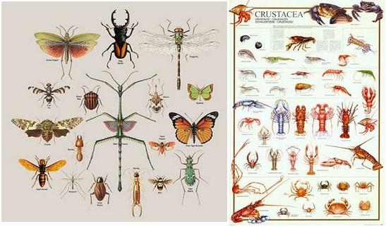Juliannn Blog S Hewan Invertebrata