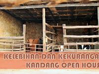 Kelebihan dan kekurangan kandang Open House