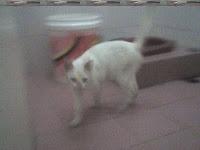 Demi menyelamatkan hidupnya, kucing rela minum air WC