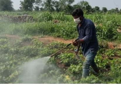 सोयाबीन की फसल पर बढा इल्ली का प्रकोप, नीमच और मंदसौर जिले में खंडवार हुई सोयाबीन की फसल, एक माह की फसल पर अधिक असर