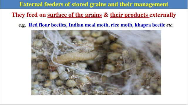 Internal Feeders of Stored Grains and their Management