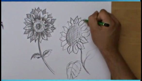 Vaso Di Fiori Disegno A Matita Affordable Disegno Matita Ritratti