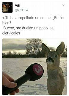 ciervo,ciervicales