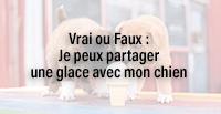 Vrai ou Faux : Je peux partager une glace avec mon chien