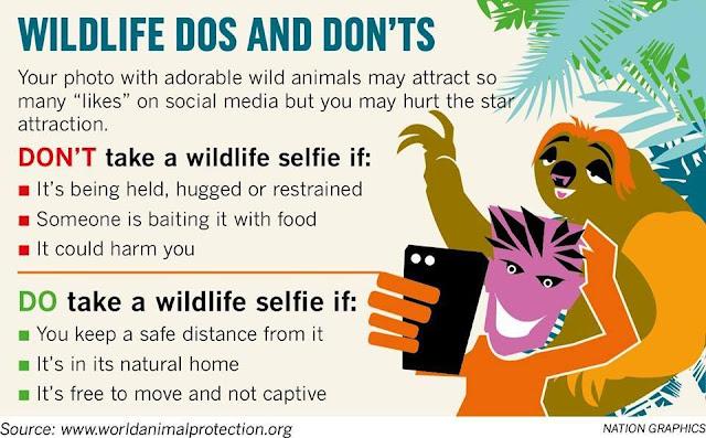 Animals at tourist destinations