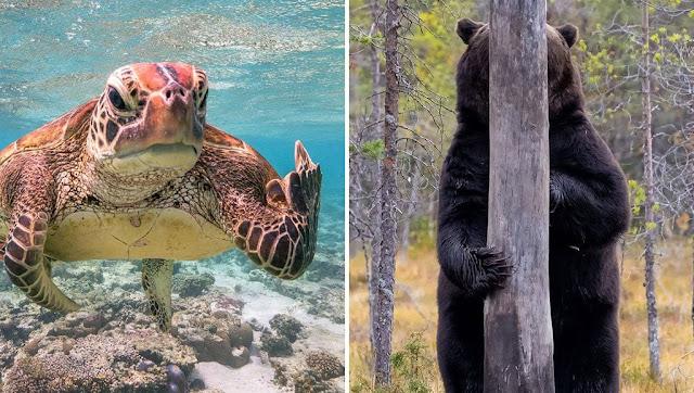 القائمة النهائية للمرشحين لجائزة كوميديا الحياة البرية للتصوير لعام 2020