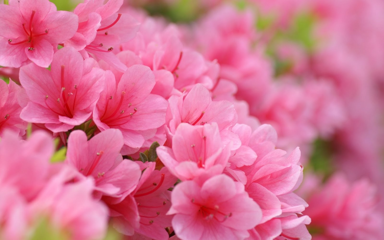pink spring flowers - photo #2