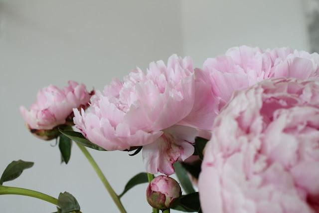 DIY Hochzeitsgeschenk letzte Pfingstrosen Brautstrauss