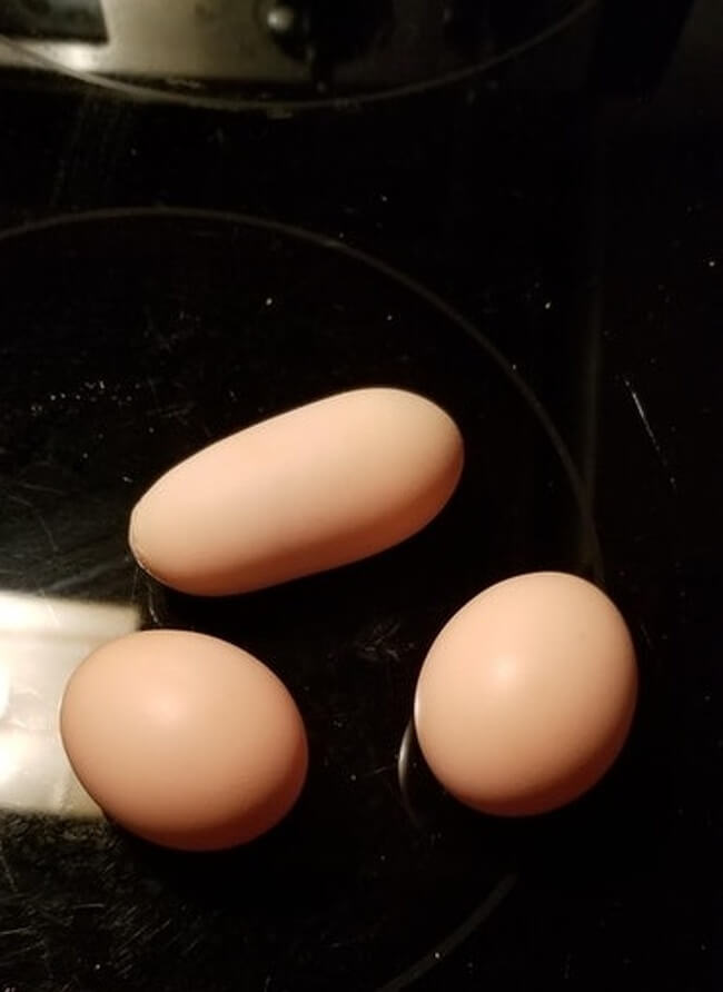 The Rarest Things We Have Ever Seen Captured In 17 Mind-Blowing Pictures - 'I got an egg of an unusual shape.'