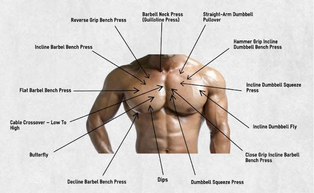 Pectoral Exercises