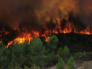 Realizará Chiapas concurso sobre prevención de incendios forestales