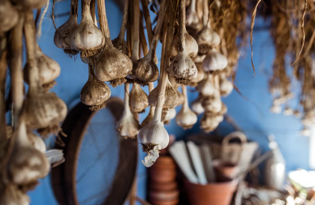 What are the benefits of garlic for the body - for the heart - for aging