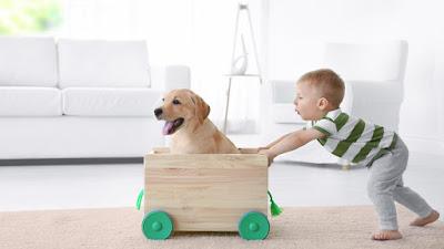 binatang peliharaan, anak, psikologi, perkembangan anak,