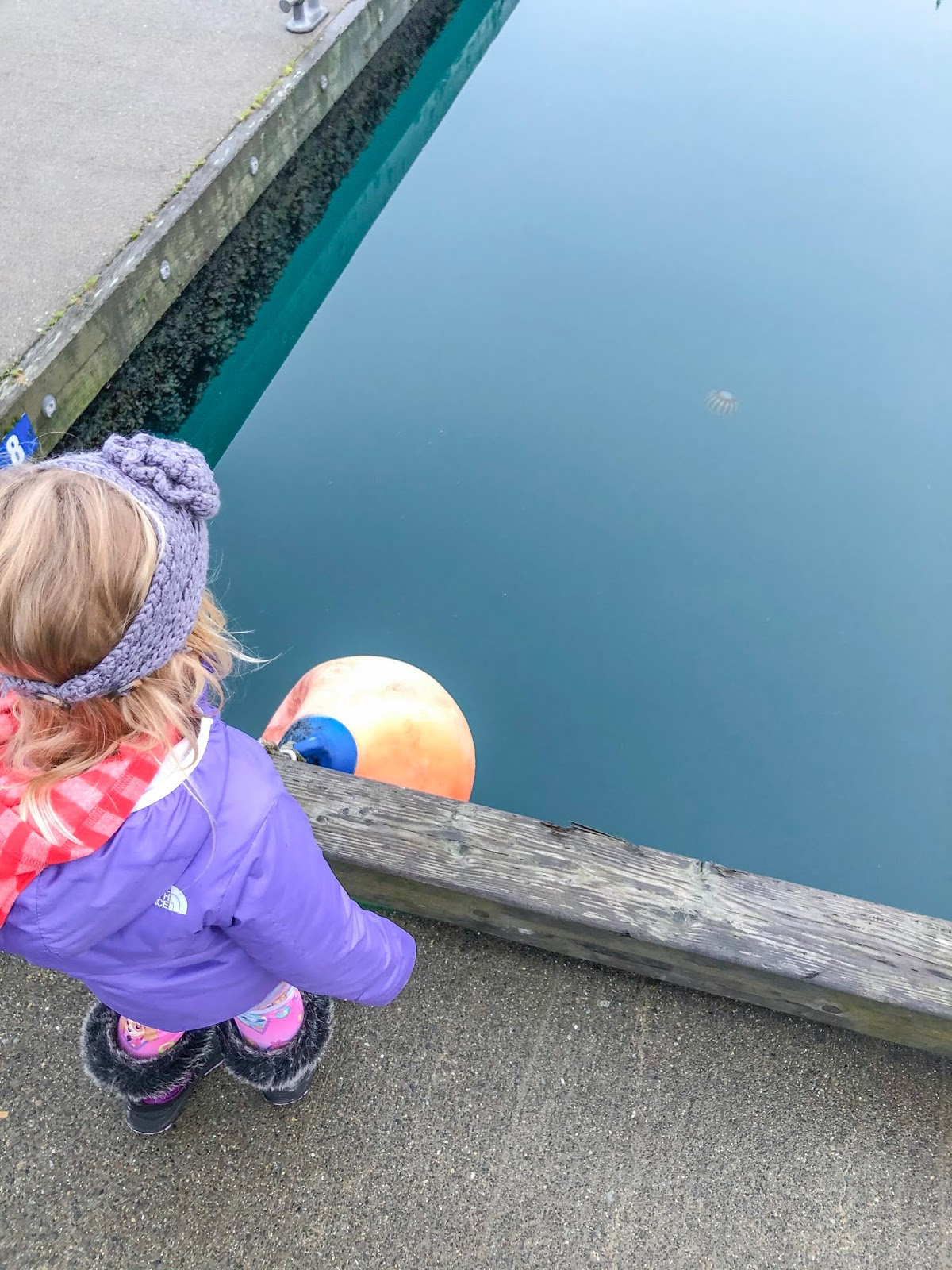 little girl looking at jellyfish in Seward Harbor