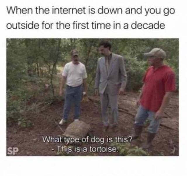 type of dog is this meme - When the internet is down and you go outside for the first time in a decade What type of dog is this? This is a tortoise. Sp