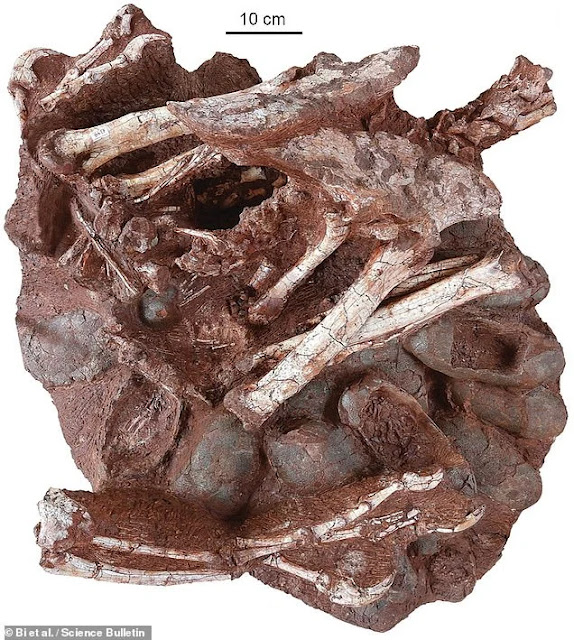 Palaeontology-Fossilised-remains-dinosaur-sitting-nest-eggs-embryos-inside