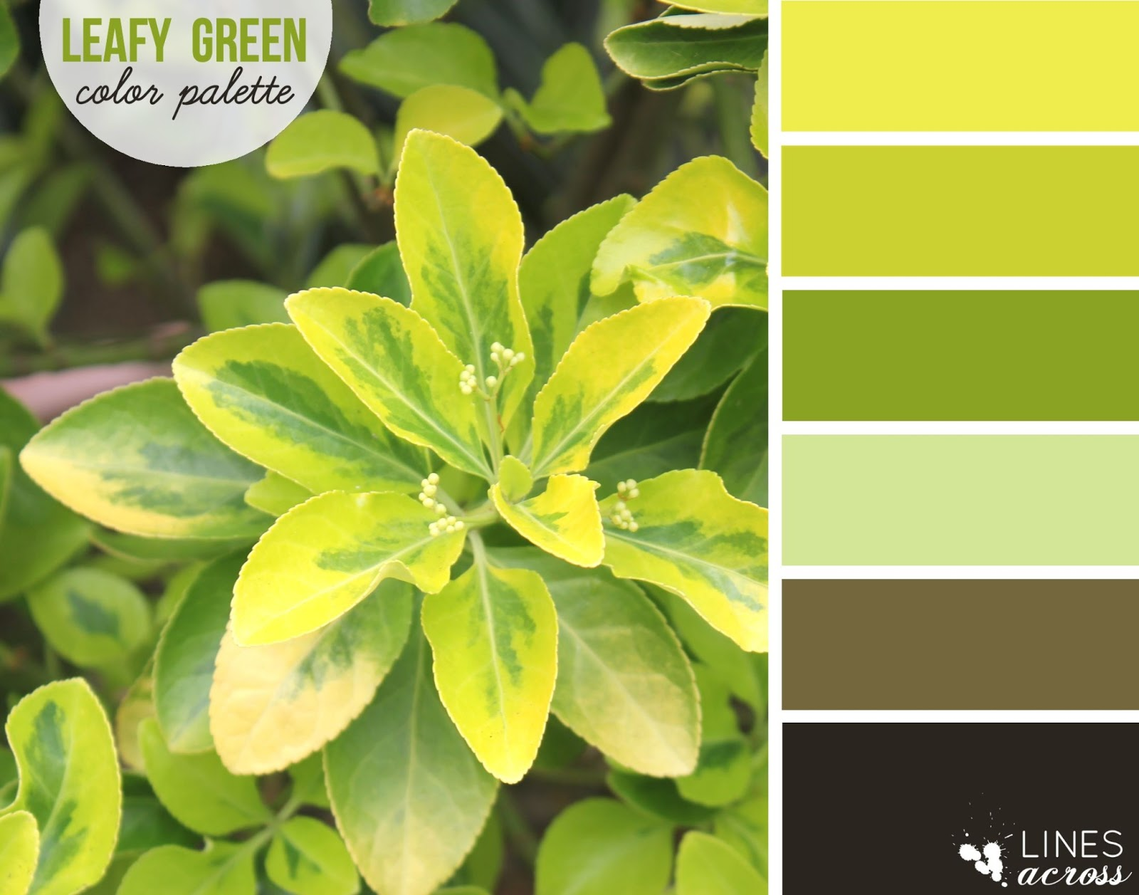 Leafy Green Color Palette - Lines Across