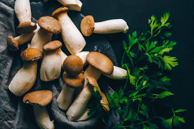 Mushroom Supplier Company in Warangal