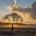 Drzewo mojego życia.  Kilka słów o przekonaniach | Prawo przyciągania