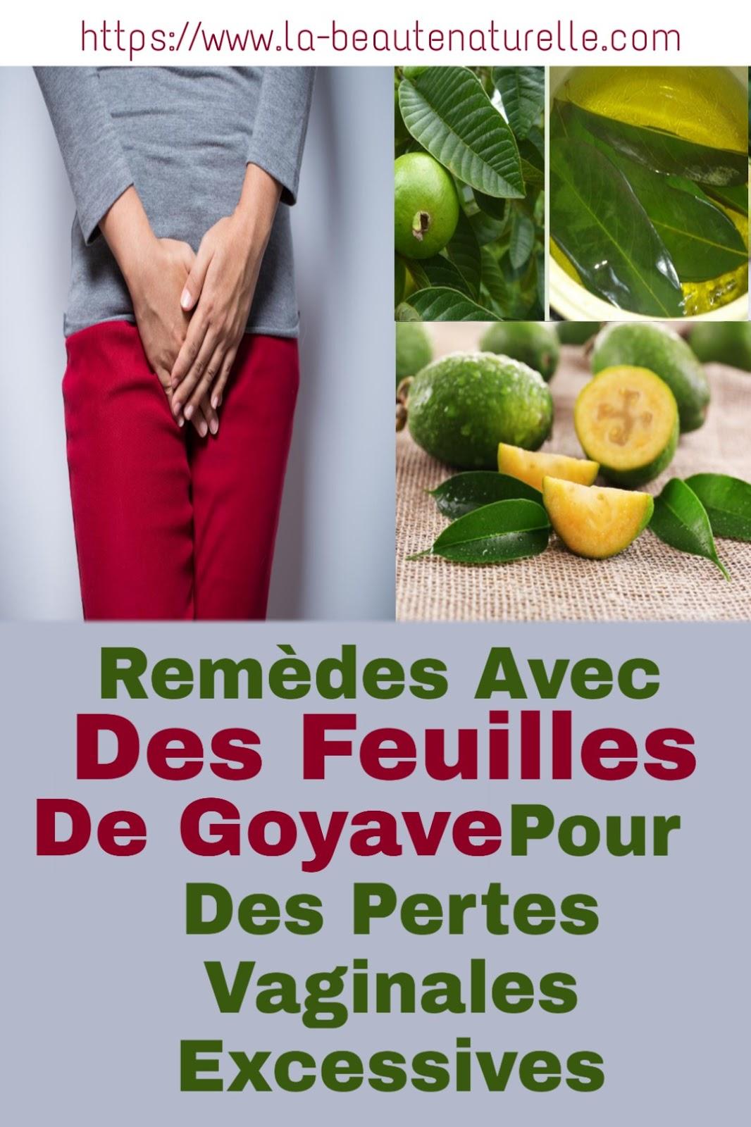 Remèdes Avec Des Feuilles De Goyave Pour Des Pertes Vaginales Excessives