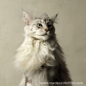 Award winning photograph by Marie Cecile Thijs: Her Majesty - a cat with a crown
