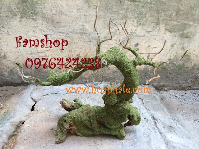 Goc cay bonsai mai dao tai Nhat