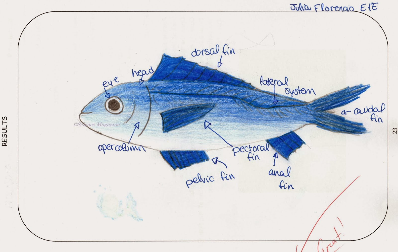 diagram ray fish diagram label full version hd quality diagram draw a freebody diagram for a goldfish physics [ 1600 x 1012 Pixel ]