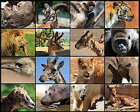 топ 10 животных опасных для человека список