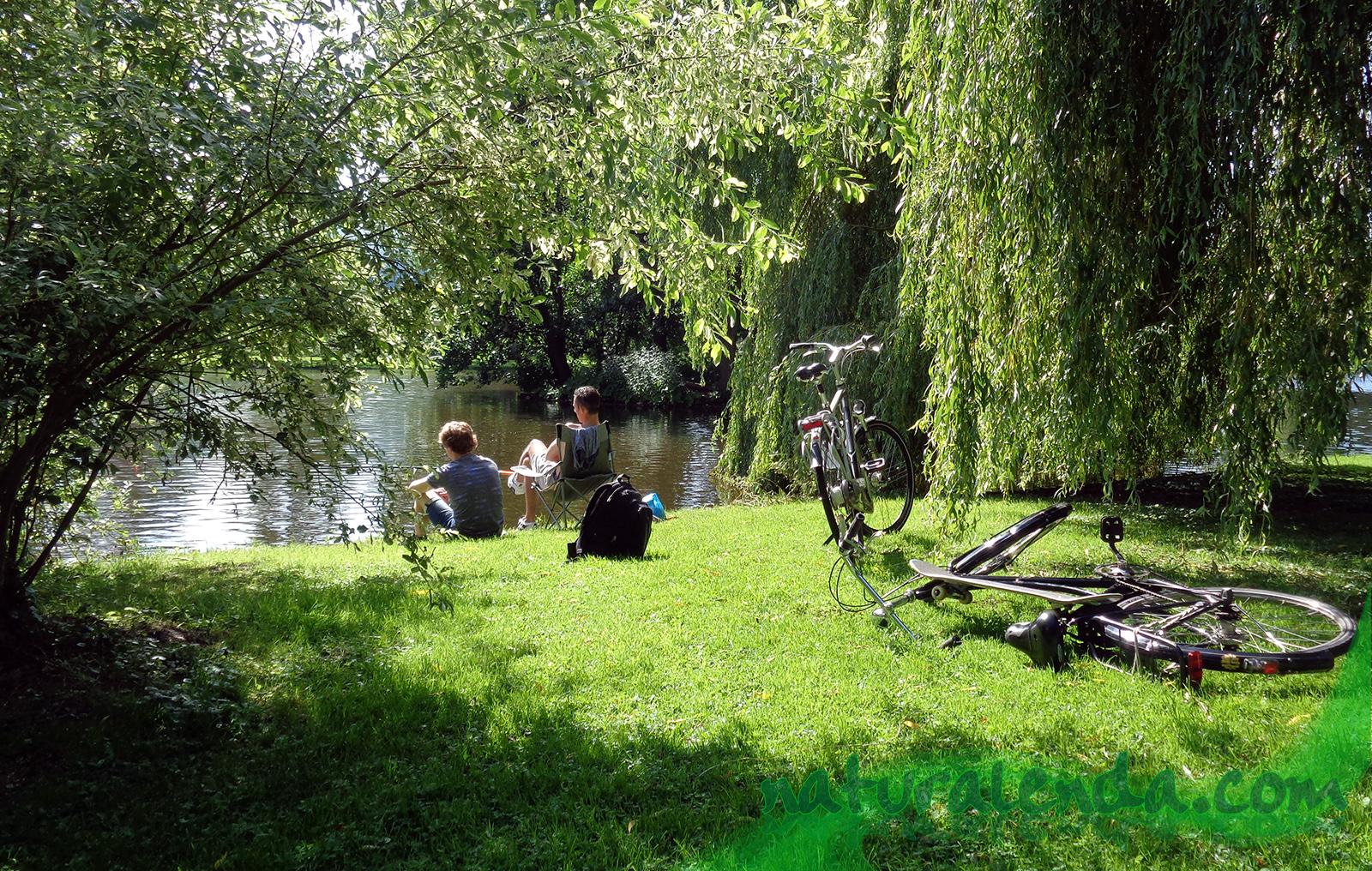 bicis, cesped y pesca