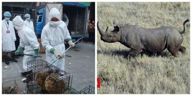 China bans consumption and trade of wild animals