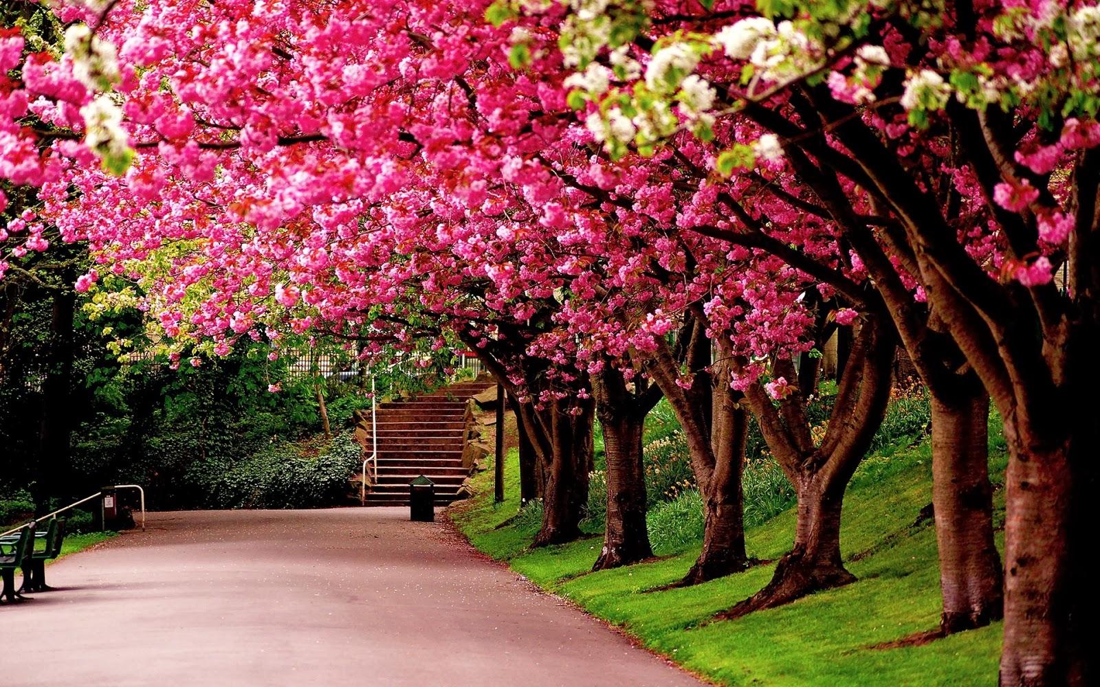 Ảnh đẹp làm hình nền thiên nhiên những con đường tơ lụa Ảnh Đẹp