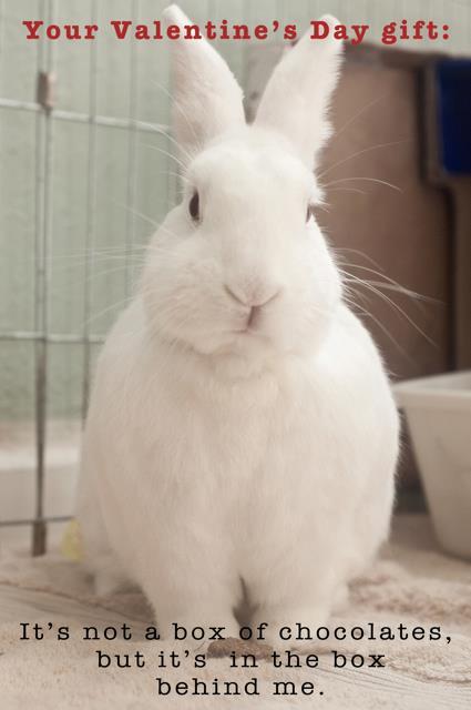 rabbit ramblings: happy valentine's day, Ideas
