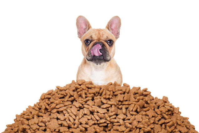 Why Is My Dog Always Hungry? – Understanding What's Happening In Your Dogs Body