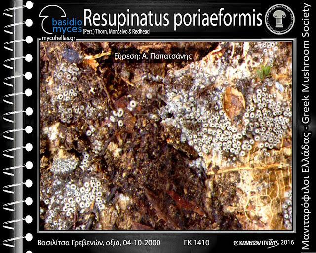 Resupinatus poriaeformis (Pers.) Thorn, Moncalvo & Redhead