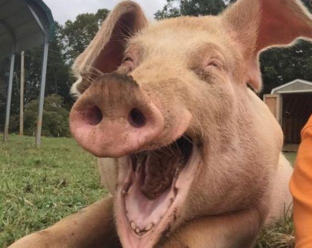 Portugal | O abraço ao porco