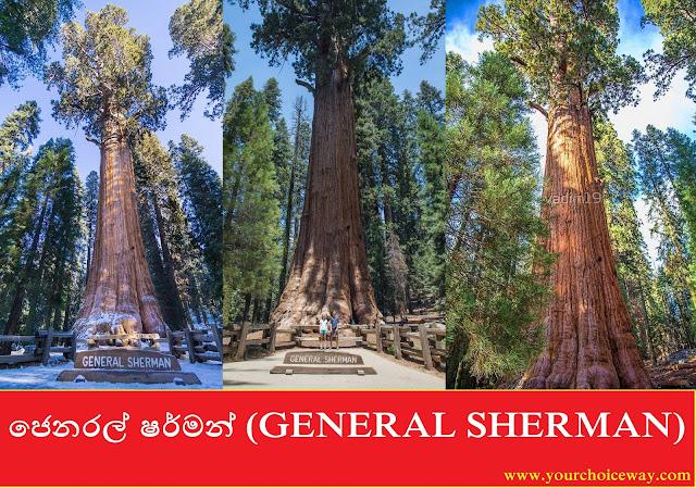 ජෙනරල් ෂර්මන් (GENERAL SHERMAN) - Your Choice Way
