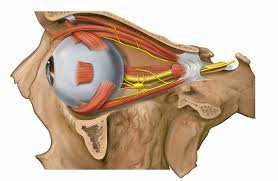 Eyes disease, eye-related