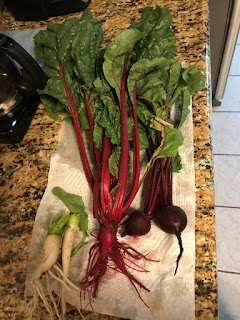 small harvest of radishes, chard, and beets