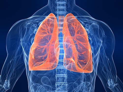 Clean the lungs of smoke and toxins in a few hours