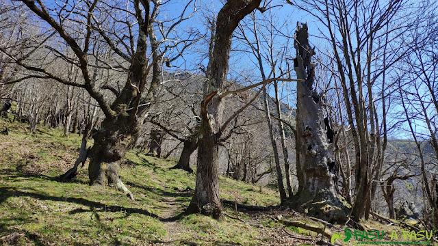 Bosque a la salida de Valdimiera