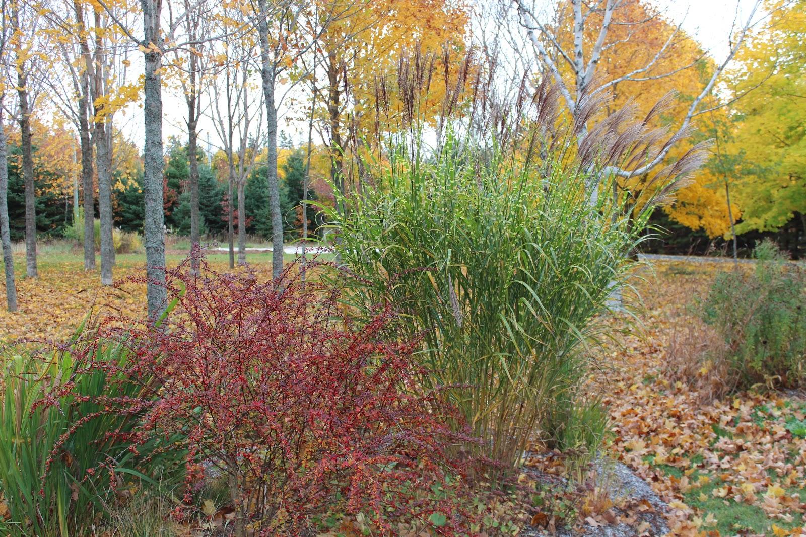 lovegrass farm fall colors of grasses at lovegrass farm. Black Bedroom Furniture Sets. Home Design Ideas