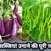 छत पर सब्जियां उगाने की पूरी जानकारी