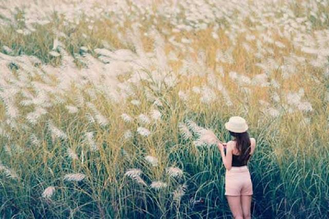 Du lịch Đà Nẵng: Thỏa sức selfie với rừng cỏ lau