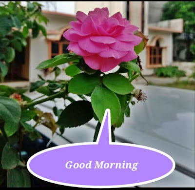 Good Morning Life-Status-Quotes, Hindi quotes, motivational quotes in Hindi, Good morning sms, achhi bate, pic with quotes, photo, good morning photo-pic, life quotes in hindi