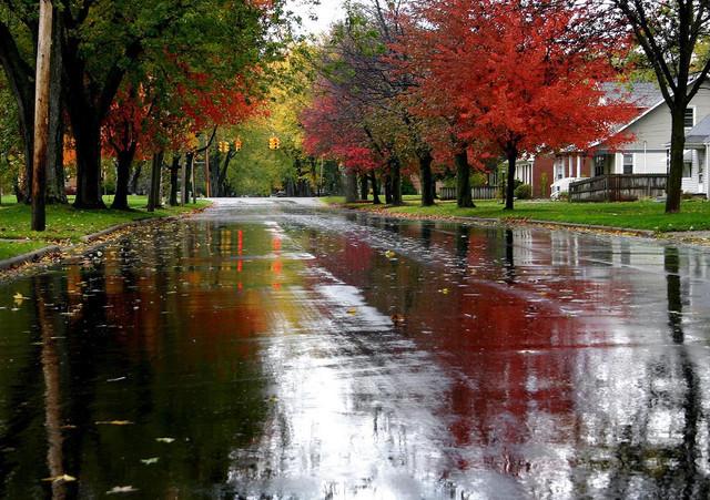 Autumn Vanilla Picture: Autumn Rain