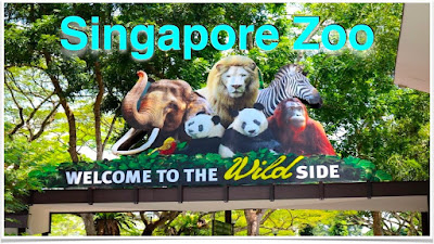Singapore Zoo - Trips Wheel Pvt Ltd